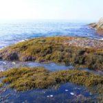 ROC-POP Life: restauro ambientale delle foreste marine