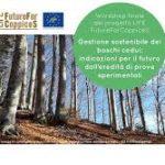 CREA: boschi cedui, presentati i risultati del progetto Future for Coppices