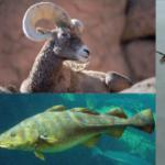 Tutelare la cultura animale: una nuova strategia per la conservazione delle specie