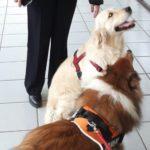 Al Presidio Ospedaliero Martini di Torino arriva la Dog Therapy