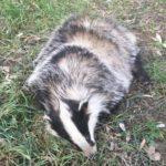 Nel 2018 soccorsi 1.034 animali nei comuni dell'Ausl Toscana centro