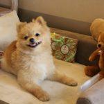 Negli hotel sofà prestigiosi, ciotole di design e raffinati gadget per gli amici animali