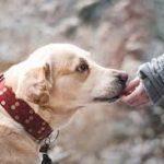 Possedere un cane giova ai pazienti affetti da BPCO