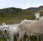 ASLTO 3: sottoscritta la nuova convenzione operativa per la gestione delle popolazioni animali delle Aree protette delle Alpi Cozie