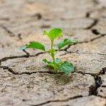 Scoperta proteina che genera resistenza alla siccità