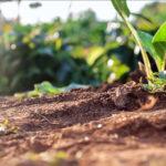 Al via il Progetto europeo Excalibur alla scoperta della biodiversità microbica del suolo