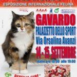 Esposizione Internazionale Felina a Gavardo