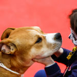 Pet therapy a Quattrozampeinfiera