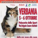 I Gatti Più Belli del Mondo arrivano al palasport di Verbania