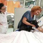 Pet Therapy in terapia intensiva: prima volta al San Giuseppe di Empoli con il cocker Nello