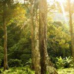 """Le aree di """"wilderness"""" dimezzano il rischio di estinzione delle specie"""