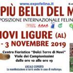 I Gatti Più Belli del Mondo – Esposizione Internazionale Felina a Novi Ligure