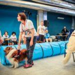 A Torino interventi assistiti con animali in Psichiatria