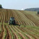 Dagli scarti agricoli la farina di insetti per mangimi animali
