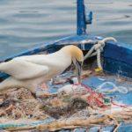 Mediterraneo: quasi 50.000 esemplari di 116 specie diverse hanno ingerito plastica