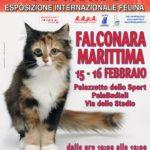 I GATTI PIU' BELLI DEL MONDO: Esposizione internazionale felina a Falconara Marittima