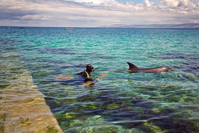 Giornata mondiale dei delfini: i mari irlandesi santuario di delfini e balene