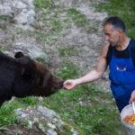 Val di Non: l'orso Bruno e Fausto, il suo custode e amico