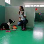 Nasce l'asilo per cani Gli Amici di Ceci a Merate