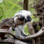 Fiocchi rosa e azzurri a Le Cornelle: il parco festeggia la nascita e l'arrivo di nuovi esemplari di specie a rischio