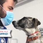 """Amici a quattro zampe e Covid-19: grazie a ENPA e Hill's Pet Nutrition si può """"Adottare in sicurezza"""""""