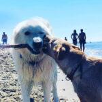 Baubeach nuovo polo di formazione sullo studio dell'etologia del cane