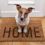 SOS stress da rientro per il cane: ecco cosa fare