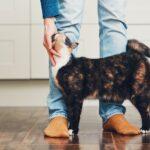 MSD Animal Health presenta il progetto POFT