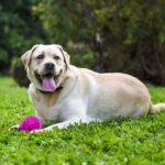 Un terzo dei proprietari non sa riconoscere se il proprio pet è in sovrappeso o obeso