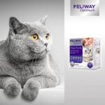Feliway Optimum: arriva un nuovo complesso di feromoni per gatti