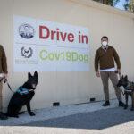 Covid-19: cani addestrati per riconoscere i malati dal sudore