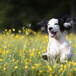 A primavera e Pasqua i pericoli per i cani