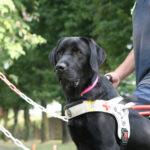 Maxi Zoo invita i pet lover a sostenere la campagna a favore del Servizio Nazionale Cani Guida dei Lions