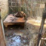 A Modena un progetto per il recupero degli orsi