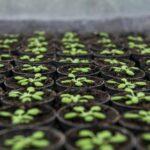 Lo iodio fa bene anche alle piante