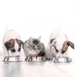 Pet food: il mercato italiano cresce del 4,2% a valore, il giro d'affari supera i 2 miliardi di euro