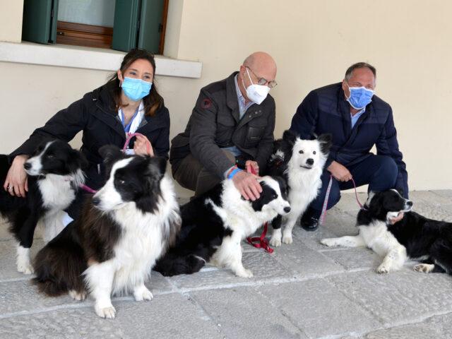 Pet therapy a domicilio per i pazienti dell'onco-ematologia pediatrica del Ca' Foncello di Treviso