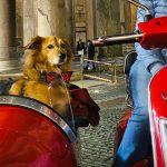 Cinque esperienze da fare con il proprio cane almeno una volta nella vita