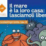"""""""Il mare è la loro casa"""": LAV lancia una campagna per i bambini sul rispetto degli animali marini"""