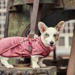 Hurtta Razzle-Dazzle Mid Layer protegge il cane nella mezza stagione