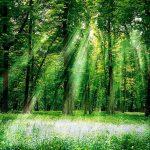"""Presentato il """"Report Progetti forestali di sostenibilità 2020"""""""