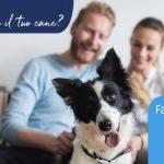 Quanto è felice il tuo cane? Da Adaptil il quiz digitale per scoprirlo