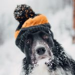 Freddo e amici a quattro zampe: come curare il pelo dei cani in questo periodo?
